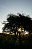 Восход солнца b дерева солнечного света Стоковые Изображения