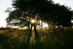 Восход солнца c дерева солнечного света Стоковое фото RF