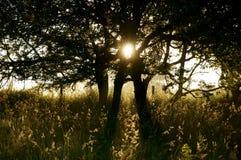 Восход солнца d дерева солнечного света Стоковые Изображения