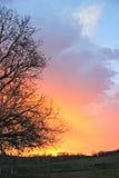 Восход солнца Sillhouette осени Стоковая Фотография RF