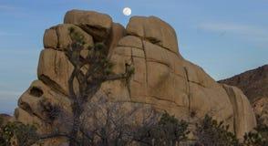Восход луны в национальном парке дерева Иешуа Стоковое Изображение RF