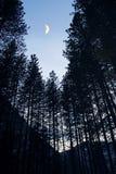 Восход луны в Yosemite forrest, национальном парке Yosemite Стоковые Изображения RF