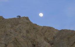 Восход луны и одиночное дерево Стоковая Фотография RF