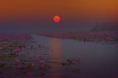 Восходящее солнце над озером лилии красной воды Стоковые Фотографии RF