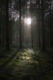 Восходящее солнце Стоковая Фотография