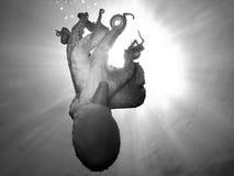 восьминог Стоковое Изображение