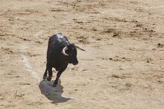 Воюя бык в арене bullring Браво Toro Испания стоковые изображения rf