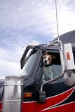 Воюя взгляды украдкой собаки из semi окна тележки защищая I Стоковые Фотографии RF