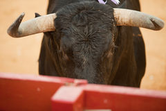 Воюя деталь быка головная Стоковая Фотография