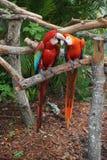 Воюя попугаи на мире бабочки, Флориде Стоковые Фотографии RF