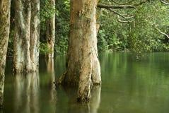 вода вала Стоковые Изображения