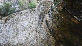 Вода водопада льет от тропиков сток-видео