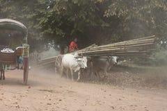 2 вола вытягивая деревянную тележку на пылевоздушной дороге, Мьянме Стоковое Изображение