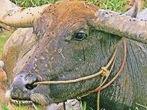 Вода в буйволе стоковая фотография