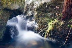 Вода в лесе Стоковая Фотография