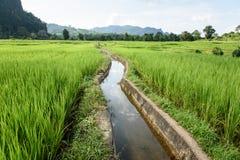 Вода в зеленом поле Стоковые Фото
