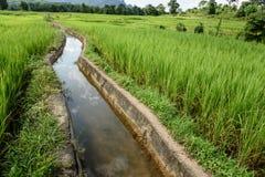 Вода в зеленом поле Стоковое Фото
