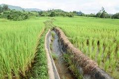 Вода в зеленом поле Стоковое фото RF