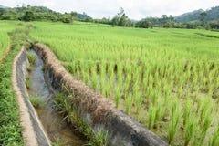 Вода в зеленом поле Стоковая Фотография RF