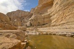 Вода в пустыне Стоковое Изображение