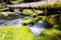 вода естественной весны стоковое фото rf