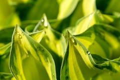 вода завода листьев падений зеленая Стоковая Фотография RF
