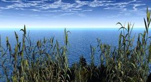 вода заводов Стоковое Изображение