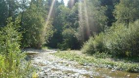 Вода источника Стоковая Фотография