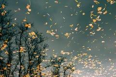 вода листьев осени Озеро осен в парке Упаденное leav Стоковые Фотографии RF