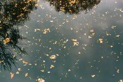 вода листьев осени Озеро осен в парке Упаденное leav Стоковое Изображение RF