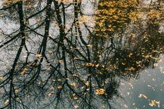 вода листьев осени Озеро осен в парке Упаденное leav Стоковое Фото