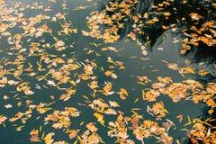 вода листьев осени Озеро осен в парке Упаденное leav Стоковая Фотография