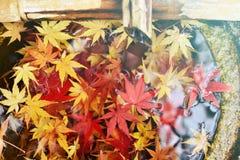 вода листьев осени Стоковые Изображения