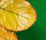 вода листьев осени Стоковая Фотография