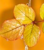 вода листьев осени Стоковые Фотографии RF