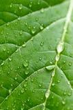 вода листьев падений зеленая Селективный фокус Стоковые Изображения