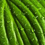 вода листьев падений зеленая Стоковые Фото