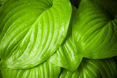 вода листьев падений зеленая Стоковые Фотографии RF