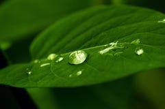 вода листьев падений зеленая Стоковая Фотография RF