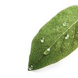 вода листьев падений зеленая Backgound Стоковая Фотография RF
