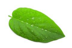 вода листьев падений зеленая Backgound Стоковые Фотографии RF