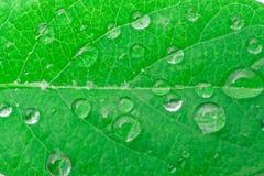 вода листьев падений зеленая Backgound Стоковое фото RF