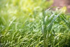 вода листьев падения зеленая Взгляд сверху Стоковое фото RF