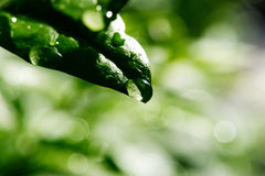 вода листьев падения зеленая Стоковое фото RF
