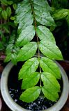 вода листьев падения зеленая Стоковое Фото