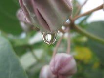 вода капек Стоковые Фотографии RF