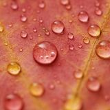 вода клена листьев падений Стоковые Фото