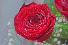 вода красивейших падений красная розовая Стоковая Фотография RF