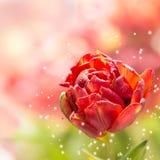 вода красивейших падений красная розовая Стоковое Фото