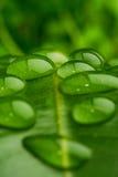 вода листьев крупного плана Стоковое Фото